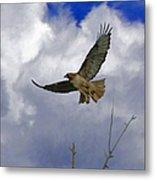Red Tail Hawk Digital Freehand Painting 1 Metal Print