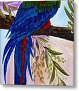 Red Tail Macaw Metal Print