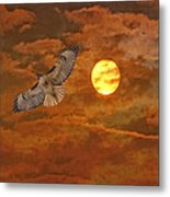Red Tailed Hawk Metal Print