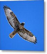 Red-tailed Hawk Arizona Metal Print