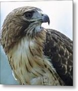 Red-tailed Hawk Profile Metal Print