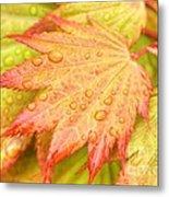 Red Tip Leaf Metal Print