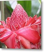 Red Torch Ginger Metal Print