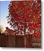 Red Tree At Sunset Metal Print