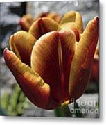 Red Tulip  2116 Metal Print