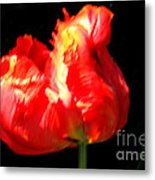 Red Tulip Blurred Metal Print