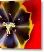 Red Tulip Macro Metal Print