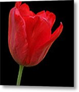 Red Tulip Open Metal Print