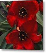 Red Tulip Pair Metal Print