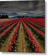 Red Tulip Rows Metal Print