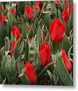 Red Tulips II Metal Print by Maeve O Connell