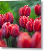 red tulips II Metal Print