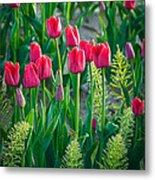 Red Tulips In Skagit Valley Metal Print by Inge Johnsson