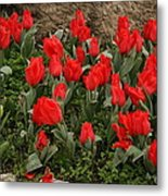 Red Tulips Metal Print by Maeve O Connell