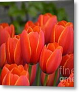 Red Tulips Outlined In Yellow Metal Print