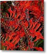 Red Devils Tongue Vine Vertical Metal Print