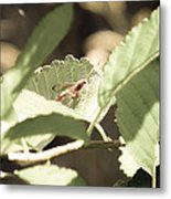 Red Wasp Metal Print