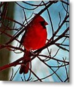 Red White And Blue Cardinal Metal Print