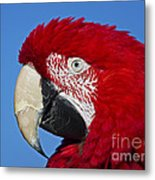 Red White And Blue... Metal Print