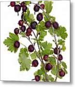 Red Wild Forest Berries Metal Print