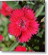 Red Winery Flower Metal Print