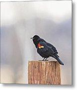 Red Wing Black Bird On Post II Metal Print