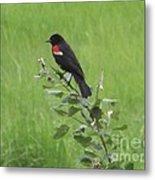 Red Wing Blackbird Metal Print