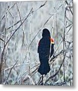 Red Wing Perched Metal Print