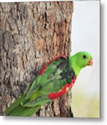 Red-winged Parrot Metal Print