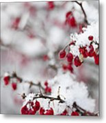 Red Winter Berries Under Snow Metal Print