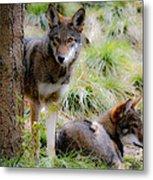 Red Wolves Metal Print