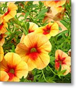 Red Yellow Morning Glories Metal Print