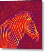 Red Zebra Metal Print