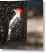 Redbellied Woodpecker Metal Print