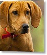 Redbone Coonhound - Man's Best Friend The Hound Dog Metal Print
