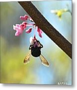 Redbud And The Bumble Metal Print