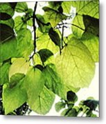 Catalpa Branch Metal Print
