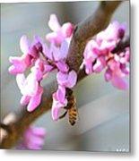 Redbud Pollinator Metal Print