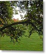 Redbud Tree In Autumn Metal Print