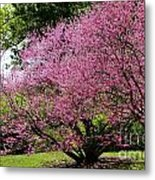 Redbuds In Action Metal Print