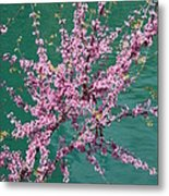 Redbuds Over San Antonio River Metal Print