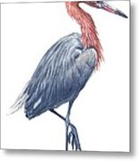 Reddish Egret Metal Print by Anonymous