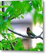 Redneck Humming Bird Metal Print