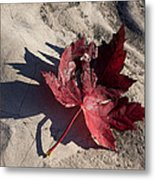 Reds And Purples - Deep Red Maple Leaf And Its Shadow Metal Print