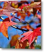 Reds Of Autumn Metal Print
