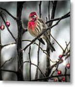 Reds Of Winter Metal Print