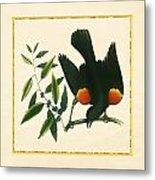 Redwing Blackbird Square Metal Print