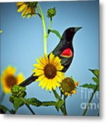Redwing In Sunflowers Metal Print