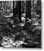 Redwood Creek Metal Print
