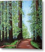 Redwood Forest Path Metal Print